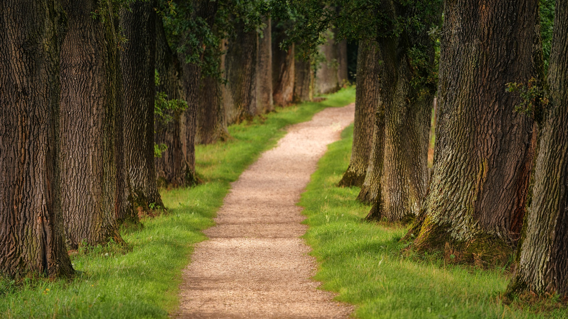 droga z wysokimi drzewami na skrajni