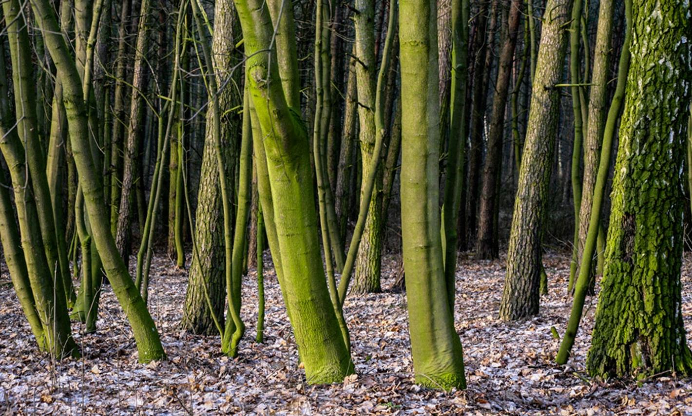 gęsty las liściasty